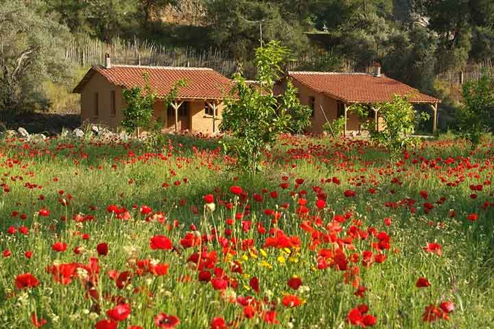 Tulips in Village on Eco Tours