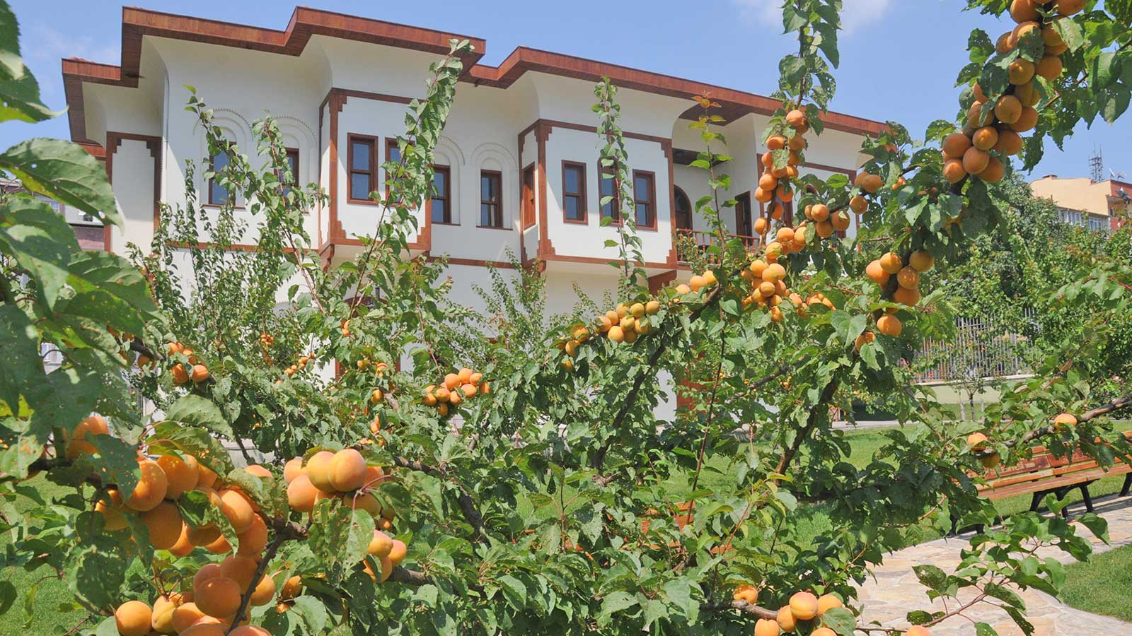 Malatya Gold The Apricots