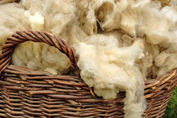 Angora Goats Wool