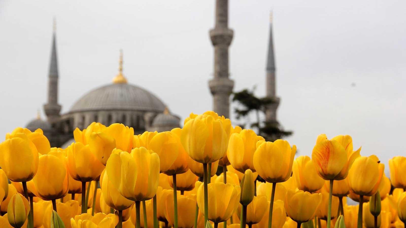 Ottoman Tulip Age