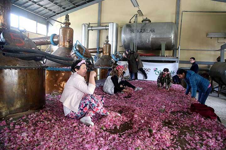 Distil Rose Water