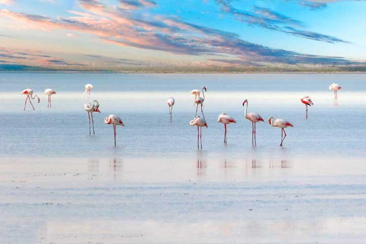 Lake Salt Turkey Flamingos