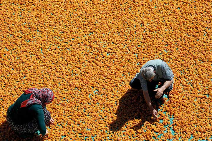 Malatya City Dried Apricots