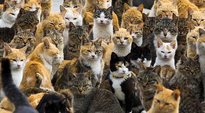 Cats Culture Istanbul