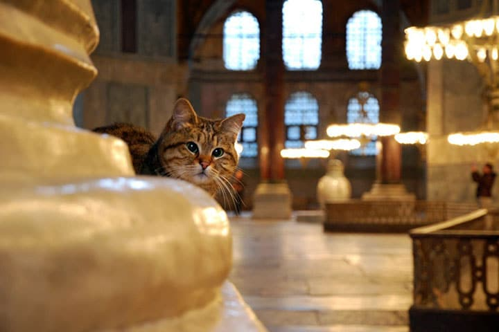 Gli: The Guardian of Hagia Sophia