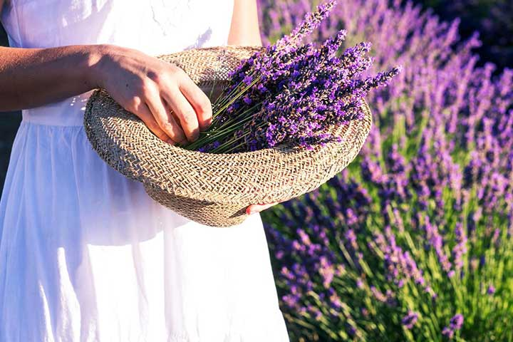 Pick Lavender Isparta