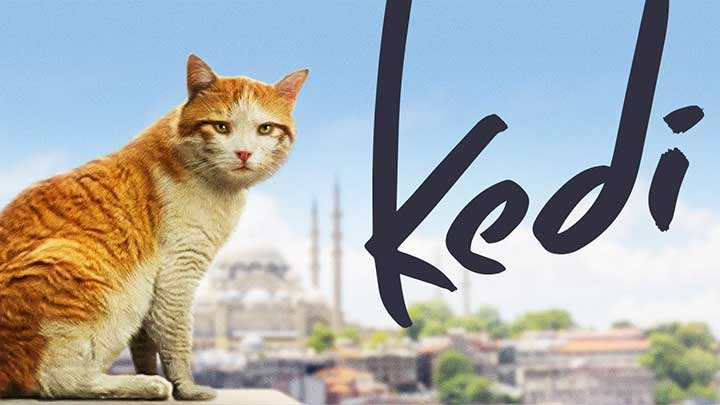 Watch Kedi Documentary