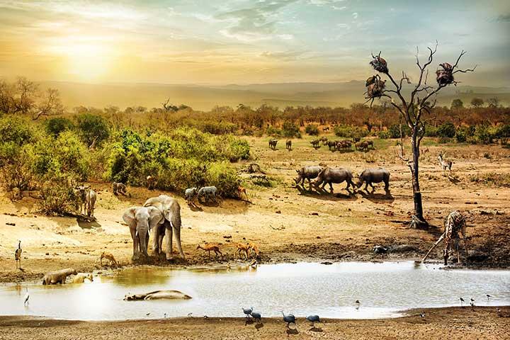 Luxury Safari Kenya