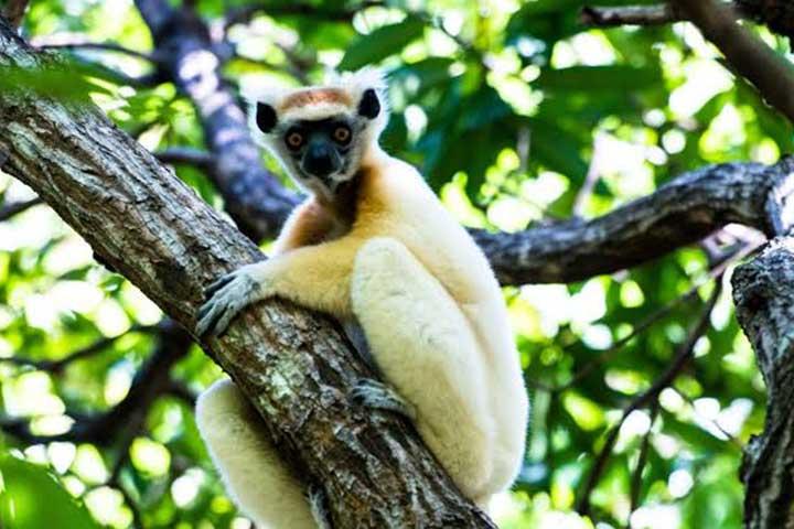 Luxury Safari Madagascar