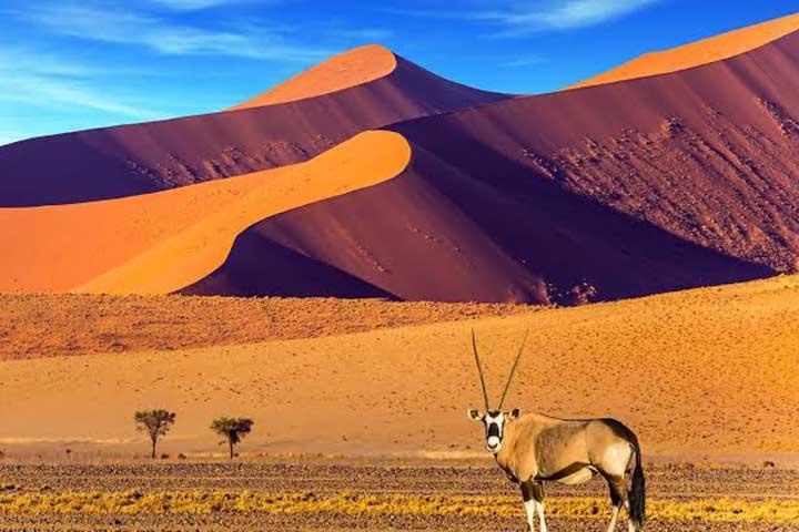 Luxury Safari Namibia