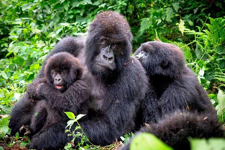 Luxury Safari Rwanda