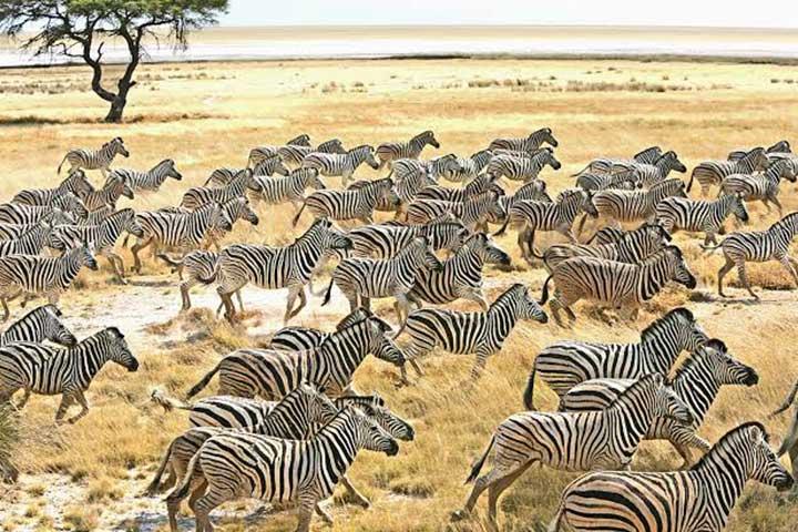 Luxury Safari Uganda
