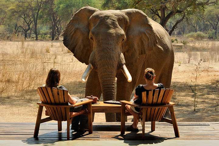 Luxury Safari Zambia